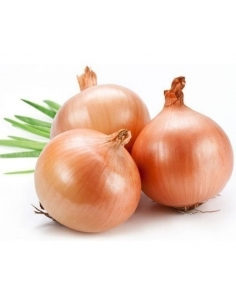 Onions - Brown /kg
