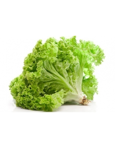 Lettuce (1 Bundle)
